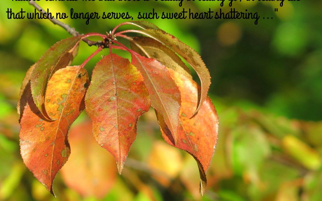 Autumn Beauty Shatters My Heart Wide Open